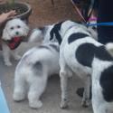 Doggies Who Brunch Too Recap!